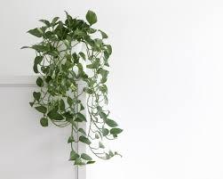 für erholsame nächte die besten pflanzen fürs schlafzimmer
