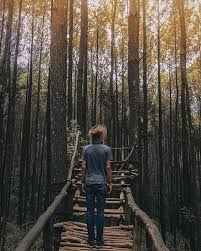 Hutan Pinus Asri Mangunan Tugu Wisata