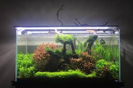 Nature's Reach. ADA 90P Aquascape : PlantedTank Aquascaping Aquarium Ideas From Aquatics Live 2012 Part 2 Youtube How To Make Trees In Planted Aquarium The Nature Style Planted Tank Awards Ultimate Shop In Raipur Fuckyeahaquascaping My 90p Tank One Month See Day 1 Here Best 25 Ideas On Pinterest Home Design Designs Aquascape Happy Journey By Adil Chaouki 1ft Cube Aquascaping Fuck Yeah Anyone Do For Your Fish Srt Hellcat Forum Archives Javidecor