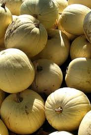 Pumpkin Festival Cleveland Ohio by Beautiful Gourds Pumpkin Festival In Ohio Oct 2012 My View Of