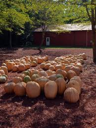Types Of Pumpkins For Baking by Growing Pumpkins In Containers Hgtv