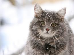 snow cat snow cat rebrn