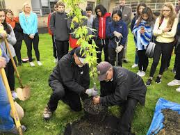 Arbor Day: Sapling From Tree Grown During Holocaust Planted ... Little Trees Coupon Perfume Coupons City Of Kamloops Tree Now Available Cfjc Today Housabels Com Code Untuckit Save Money With Cbd You Me Codes Here Premium Amark Coupons And Promo Codes Noissue Coupon Updated October 2019 Get 50 Off Mega Tree Nursery Review Online Local Evergreen Orchard Lyft To Offer Discounted Rides On St Patricks Day Table Our Arbor Foundation Planting Adventure Tamara 15 Canada Merch Royal Cadian South Carolinas Is In December Not April 30 Httpsoriginscouk August