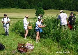 cuisine plantes sauvages cueillette et cuisine des plantes sauvages savoie mont blanc