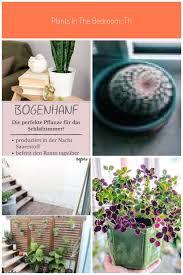 pflanzen im schlafzimmer diese sorten sind geeignet mein