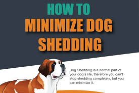 corso excessive shedding shedding solutions tips pictures
