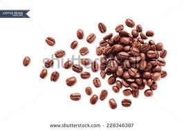 Vector Coffee Beans On White Background