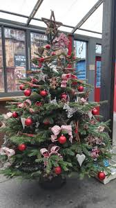 Christmas Trees Types Uk by Office Christmas Trees Plantforce Office Plants London