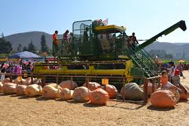 Pumpkin Patch Animal Farm In Moorpark California by October 2011 Happy Mess Moments