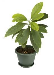 exotische wohnzimmer zimmerpflanzen und die richtige pflege
