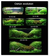 Aquascape Of The Month July 2009: