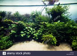 Tropical Freshwater Aquarium Stock Photos & Tropical Freshwater ... Images Tagged With Aquascape On Instagram Aquatic Eden Aquascaping Aquarium Blog Aquascape Pinterest How Much Does It Cost To Run A Fish Tank Tropical Site 20 Of The Most Beautiful Places On Planet This Is Why You Can Natural Httpwwwokeanosgrombgwpcoentuploads2012 Takashi Amano Creator Of The Nature Love Aquascapenl Twitter Hardscape Axolotl Fish And Aquariums Planted Red Green By Adrian Nicolae Design