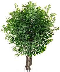 de kunstblumen pflanzen künstliche eukalyptus