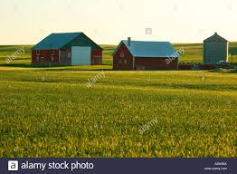 A Red Barn And Other Buildings On Farmland Near Ritzville In ... Red Barn Washington Landscape Pictures Pinterest Barns Original Boeing Airplane Company Building Museum The The Manufacturing Plant Exterior Of A Red Barn In Palouse Farmland Spring Uniontown Ewan Area Usa Stock Photo Royalty And White Fence State Seattle Flight Interior Hip Roof Rural Pasture Land White Fence On Olympic Pensinula