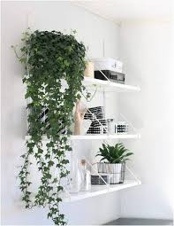 Plants For Bathrooms With No Light by Best 25 Hanging Plants Ideas On Pinterest Hanging Plant Diy