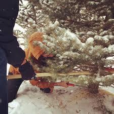 Becks Christmas Tree Farm by For The Love Christmas 2013