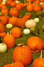Pumpkin Patch Fresno Ca First News by Halloween Weekend Massacre Halloween Mystery Short Story Kings