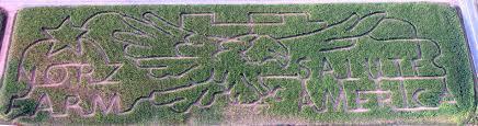 Pumpkin Picking Nj Corn Maze by A Maze Ing Norz Hill Farm