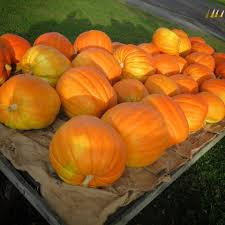 Pumpkin Patch Nj Monmouth County by Red Wagon Farm Market Home Facebook