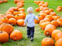 Pumpkin Patch Spring Tx by The Great Pumpkin Top 10 Patches Around Houston Culturemap Houston