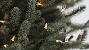 Balsam Hill Fir Artificial Christmas Tree by Bh Blue Spruce Flip Tree From Balsam Hill Youtube