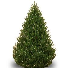 shop all types of real christmas trees the home depot