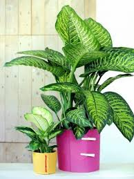 Good Plants For Bathroom by Best Plants For Bathrooms U2013 20 Indoor Plants For The Bathroom