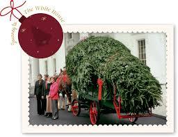Leyland Cypress Christmas Tree Growers by About Mistletoe Meadows Mistletoe Meadows