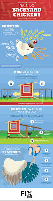 Raising Chickens At Home   Fix.com 106 Best Chickens Images On Pinterest Backyard Chickens Chicken Page 4 The Chick Quarantine Of When And How Start Raising Begning Farmers Chickenkeeping Gains Momentum In Anchorage Alaska Diy Coops Plans That Are Easy To Build Diy Chicken Coop 58 Podcasts About Homesteading Ducks Turkeys 854 243 Homestead Coops Salpingitis Lash Eggs Guest Post Want To Raise Backyard