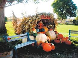 Colorado Pumpkin Patch Farm Camp by Outside Guide Corn Mazes And Pumpkin Patches U2013 The Denver Post