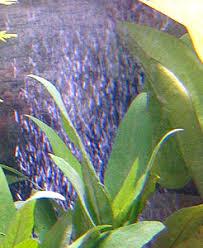 pompe a chaleur aquarium chauffer et refroidir un aquarium