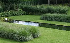 Two types of grasses a Pennisetum and a Miscanthus are used by