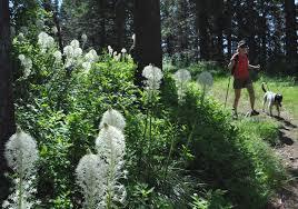 Pumpkin Patch Spokane Valley Wa by Flower Patch Spokane Valley Wa The Best Flower In 2017