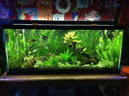 How To Set Up A Freshwater Aquarium: Beginners Guide To Your 1st ... How To Set Up An African Cichlid Tank Step By Guide Youtube Aquascaping The Art Of The Planted Aquarium 2013 Nano Pt1 Best 25 Ideas On Pinterest Httpwwwrebellcomimagesaquascaping 430 Best Freshwater Aqua Scape Images Aquascape Equipment Setup Ideas Cool Up 17 About Fish Process 4ft Cave Ridgeline Aquascape A Planted Tank Hidden Forest New Directly After Setting When Dreams Come True
