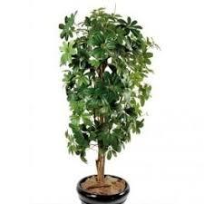 plantes vertes d interieur plantes d intérieur mt plantes achat vente de plantes d