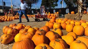 Silveyville Pumpkin Patch Dixon Ca by Pumpkin Patches In The Sacramento Area 1025 Ksfm