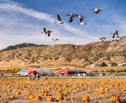 Alameda Fairgrounds Pumpkin Patch by 21 Unique Things To Do In Denver This Weekend 303 Magazine