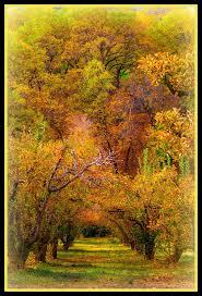 Pumpkin Patch In Yucaipa by 24 Best Beautiful Oak Glen 11 14 15 Images On Pinterest Corona