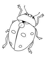 Bugs Coloring Pages Free Printable Bug For Kids Of Animals