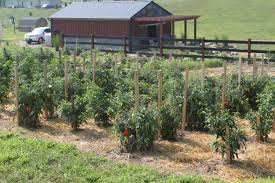 Craigslist Toledo Farm And Garden Home Design Ideas and Inspiration