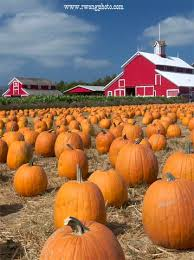 Southern Ohio Pumpkin Patches by Pumpkin Patch And Barn At Faulkner Farm Santa Paula California