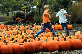 Roger Williams Pumpkin Festival 2017 by Fall In Rhode Island Your Quick Guide To The Biggest Events