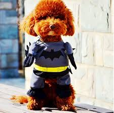 cat batman costume clothes for dogs picture more detailed picture about high