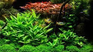 aquarium d eau douce choisir le bon filtre pour aquarium d eau douce trucs et