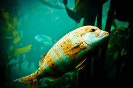 journée exceptionnelle de gratuité à l aquarium tropical de la