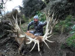 Deer Antler Shedding Cycle by Red Stag Hunting Deer Antlers Red Deer Hunting Experience In