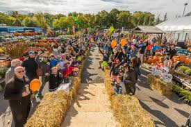Best Pumpkin Patch Minneapolis by Kristi Author At Thrifty Minnesota