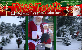 2017 20 For 40 Towards A Fresh Cut Christmas Tree At Town Wonderland