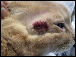 signs of worms in cats manx animal centeraubrey animal center