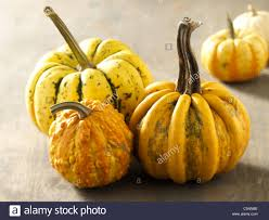 Types Of Pumpkins And Squash by Different Kinds Of Pumpkin Stock Photo Royalty Free Image
